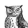 The Owl Books & Brew image